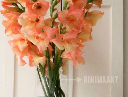 rinimaakt rini maakt Rini hoera gladiolen Do It Yourself DIY doe het zelf blog