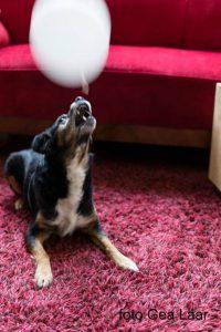 rinimaakt rini maakt Rini hond spijkerbroek matras honden Gea Laar