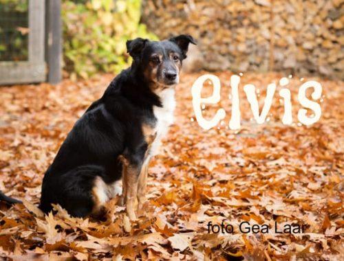 rinimaakt rini maakt Rini hond spijkerbroek matras honden Gea Laar KijkG